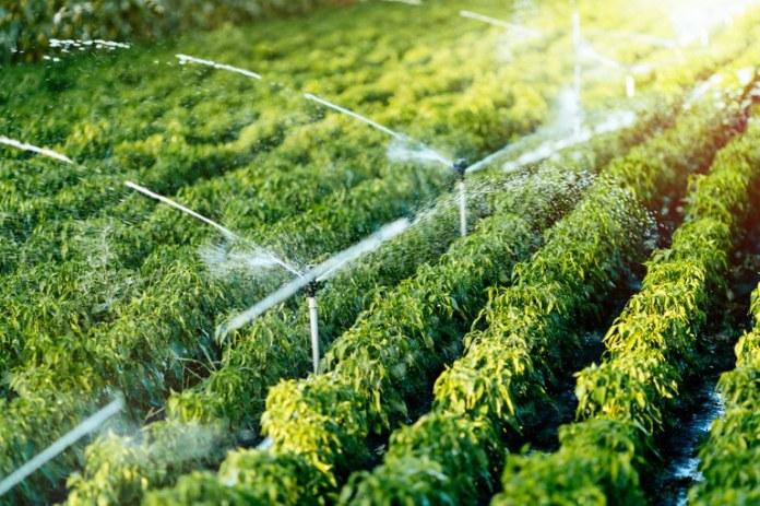 Governo lança Programa de Fomento à Agricultura Irrigada no Nordeste