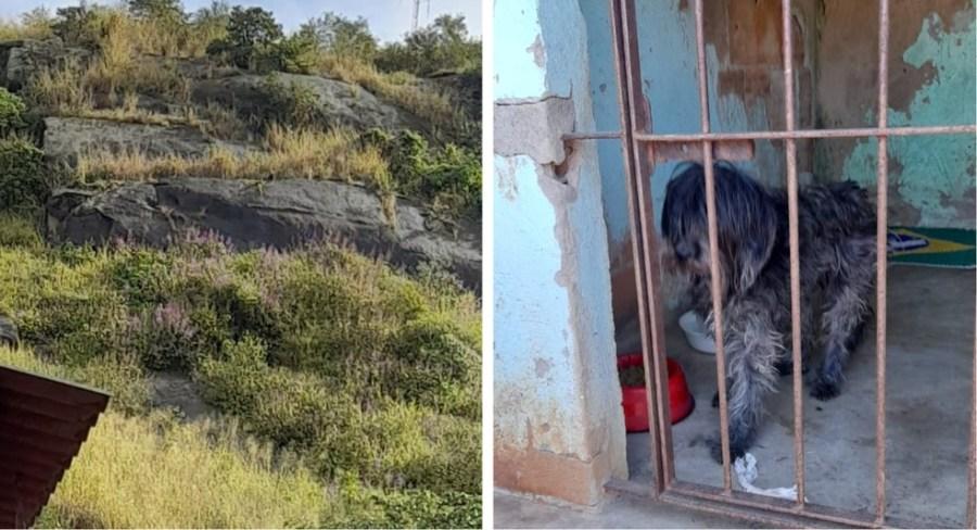 Cachorro foi resgatado de local de difícil acesso pelo Corpo de Bombeiros em Vila Velha — Foto: Divulgação