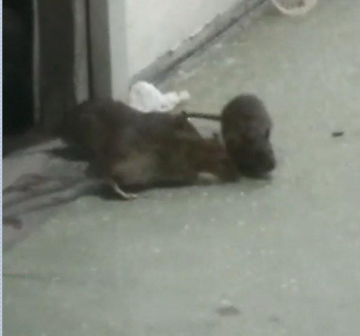 Ratos são flagrados em corredores do hospital Dório Silva, na Serra, ES — Foto: Reprodução