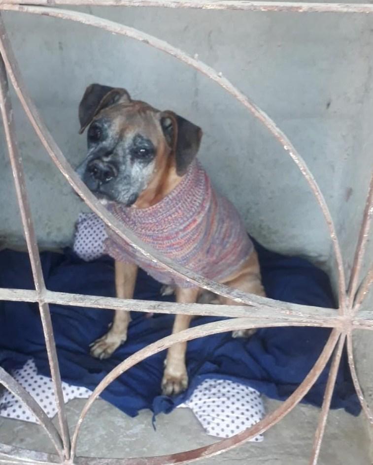Voluntários tem arrecadado doações para animais resgatados que vivem em abrigo da Serra — Foto: VC no G1
