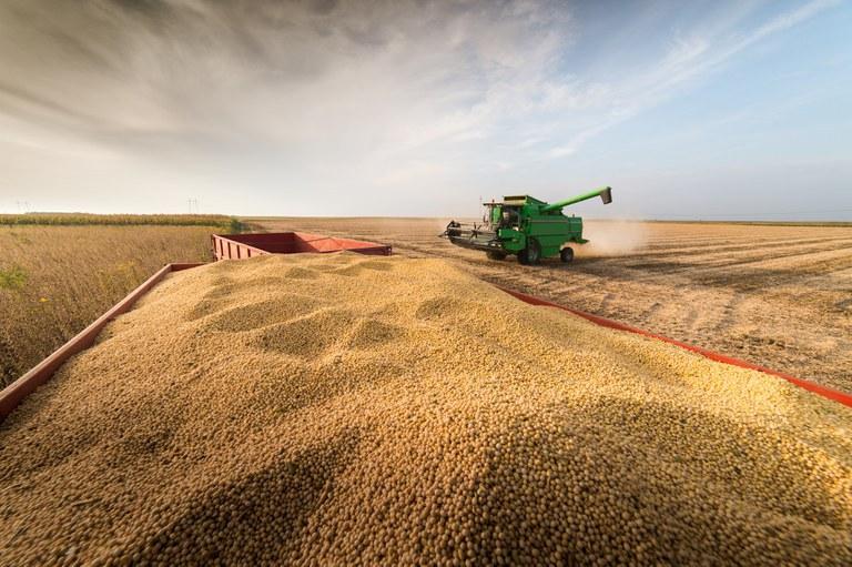 Conab estima produção total de 289,6 milhões de toneladas de grãos para safra 2021/22