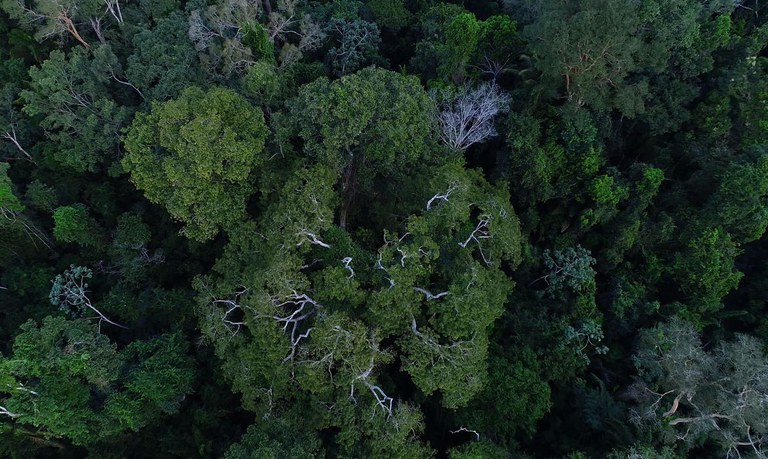 Programa Floresta + tem novo eixo voltado para bioeconomia
