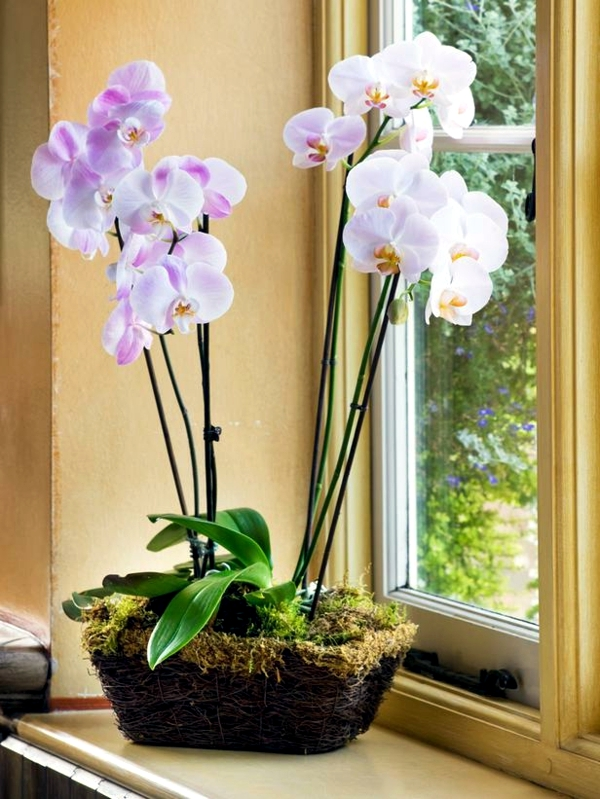 How Often Water Orchids