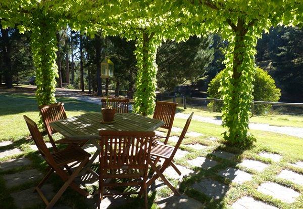 15 Best Climbing Plants For Pergolas And Arbors