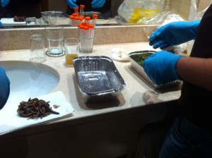 Earthworm Processing