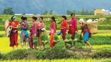 Women work during plantation season in southern Nepal during my summer internship with WEAN (Women Entrepreneur Association of Nepal). Photo by Niyanta Khatri '17
