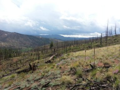 Fourmile Watershed 06/15