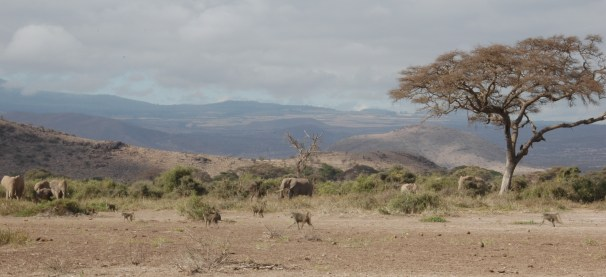 Elephants and baboons in Amboseli National Park. Submitted by Susan Alberts.