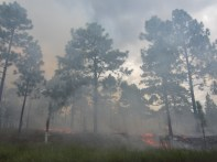 Prescribed burn in Fort Bragg, NC. Photo taken by the Wright Lab.