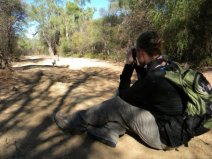 Katie Grogan following two different groups of ring-tailed lemurs; photo2