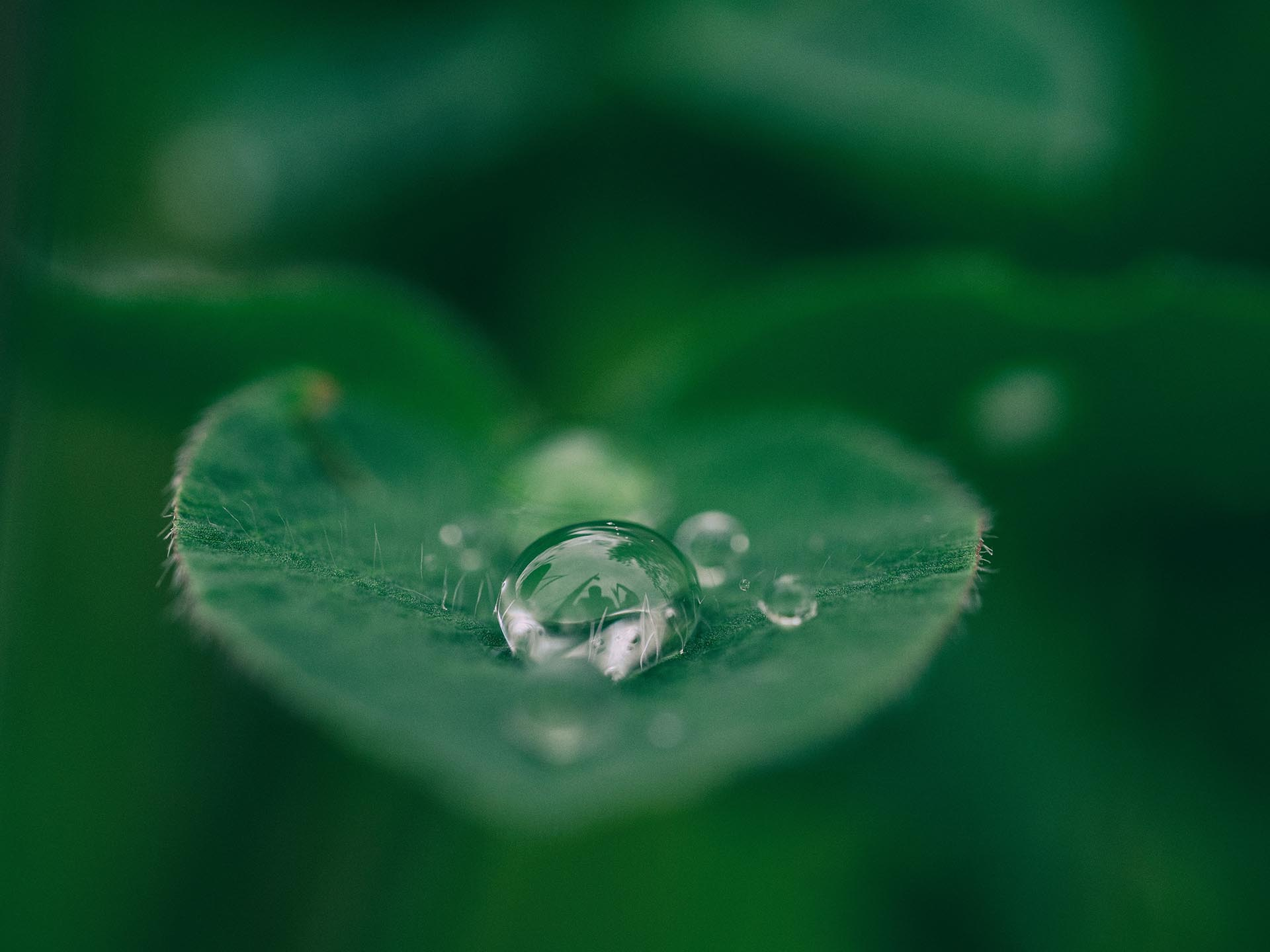 Close up a a rain drop on a green leaf