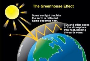 Greenhouse Effect  Nurturing the Myriad Greens
