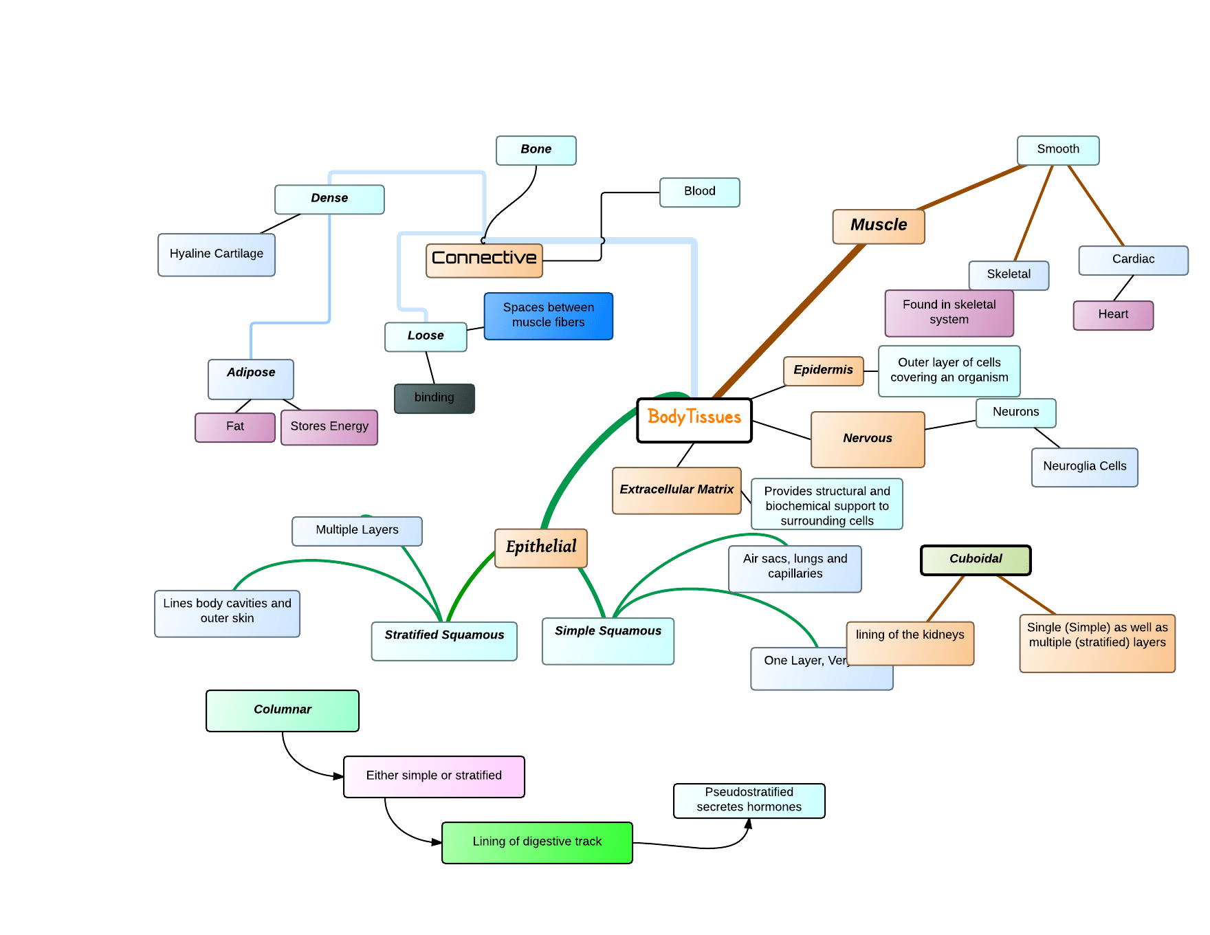 Concept Map On Body Tissues