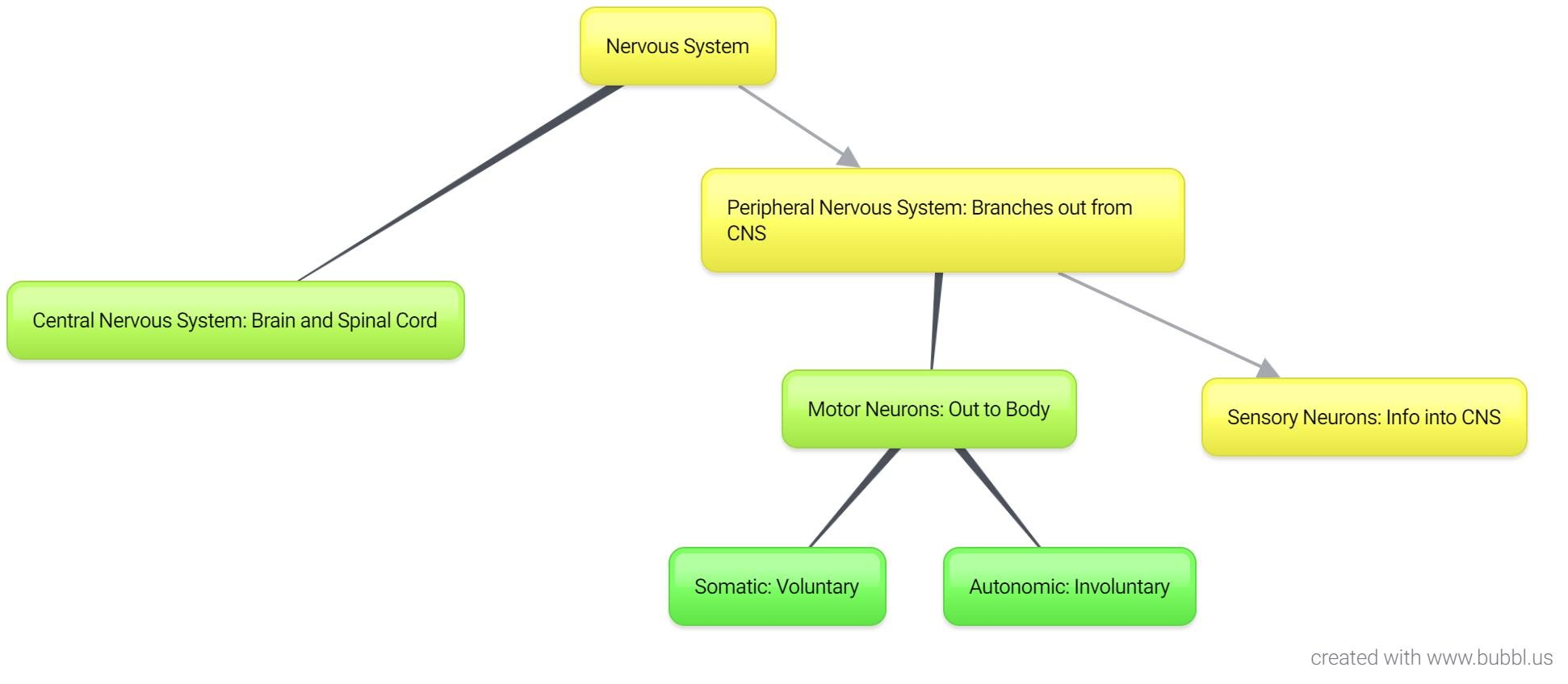 Concept Map Of Human Nervous System