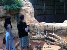 062712 Lab Outing_meercats