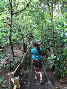 Walking path through the coffee plantation