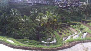 Panoramic view of the rice terrace