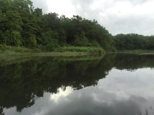 Muray River