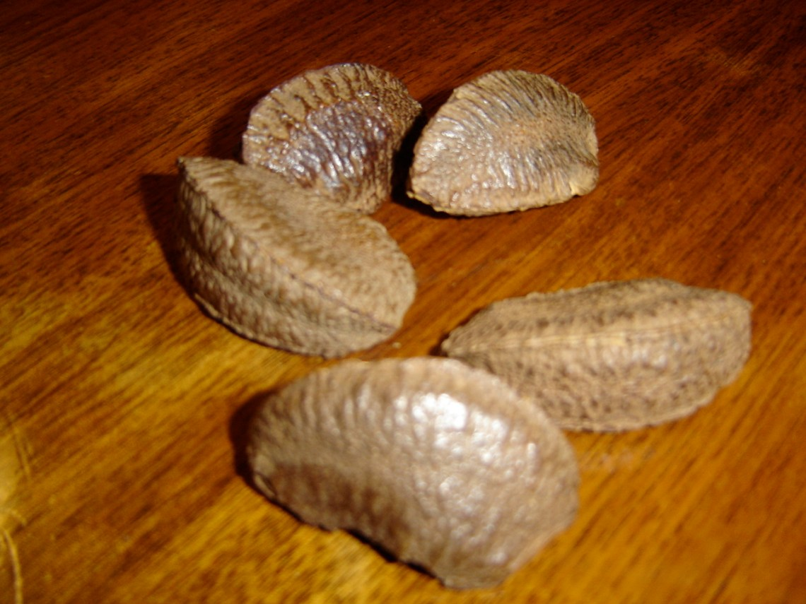 Image Result For Brazil Nut Allergyually Transmitted