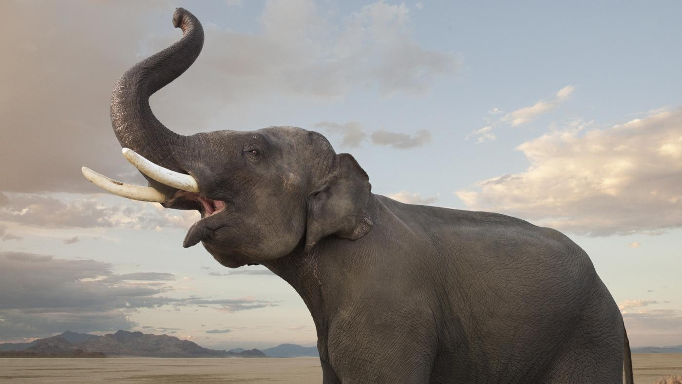 discovering elephant   siowfa16: science in our world: certainty