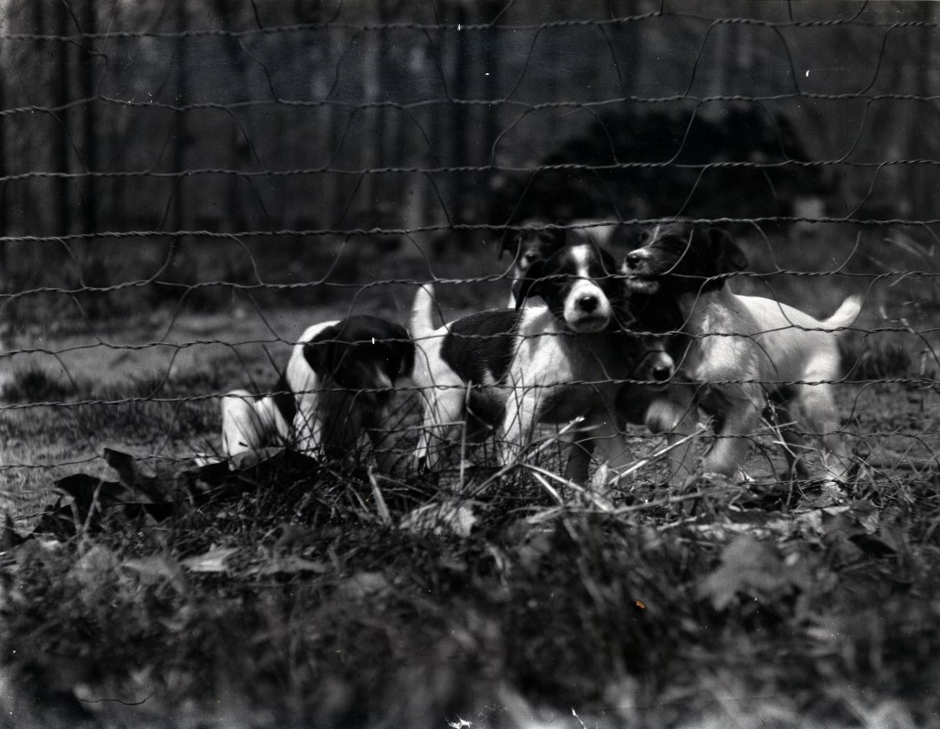 dogs at rockwood in the 1900s
