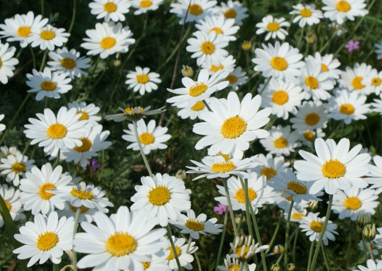 Nursing faculty and students to be recognized with The Daisy Award