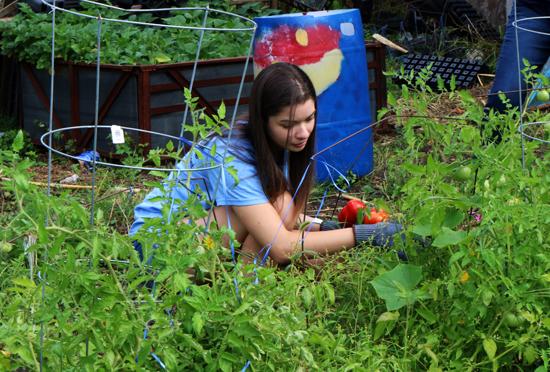 A Detroit Mercy freshman works in a garden during PTV.