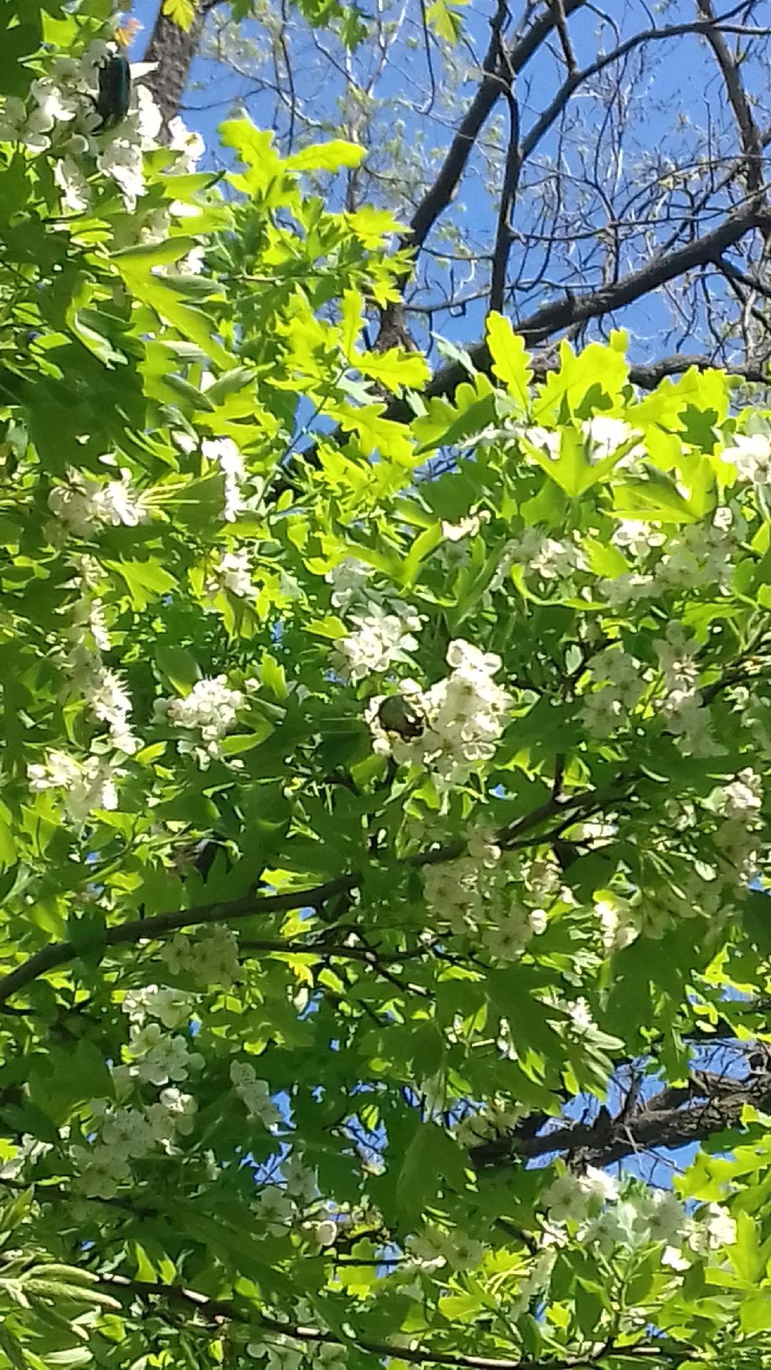 Flori de aprilie-Pleșa Andreea