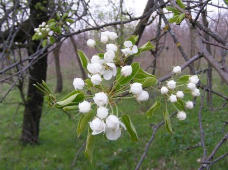 Sub zodia florilor-Topor Valentina