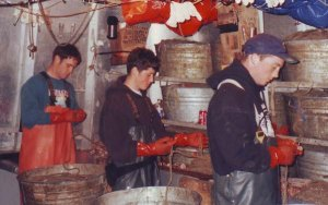 Three of Mike Mayo's sons, Jeb Morrow, Noah Mayo and Ocean Mayo bait halibut skates as crew of the F/V Coral Lee in 1997. (Photo courtesy of Mike Mayo)