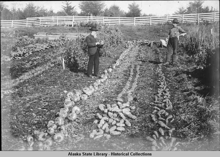 Gov. John G. Brady's garden in Sitka in 1900