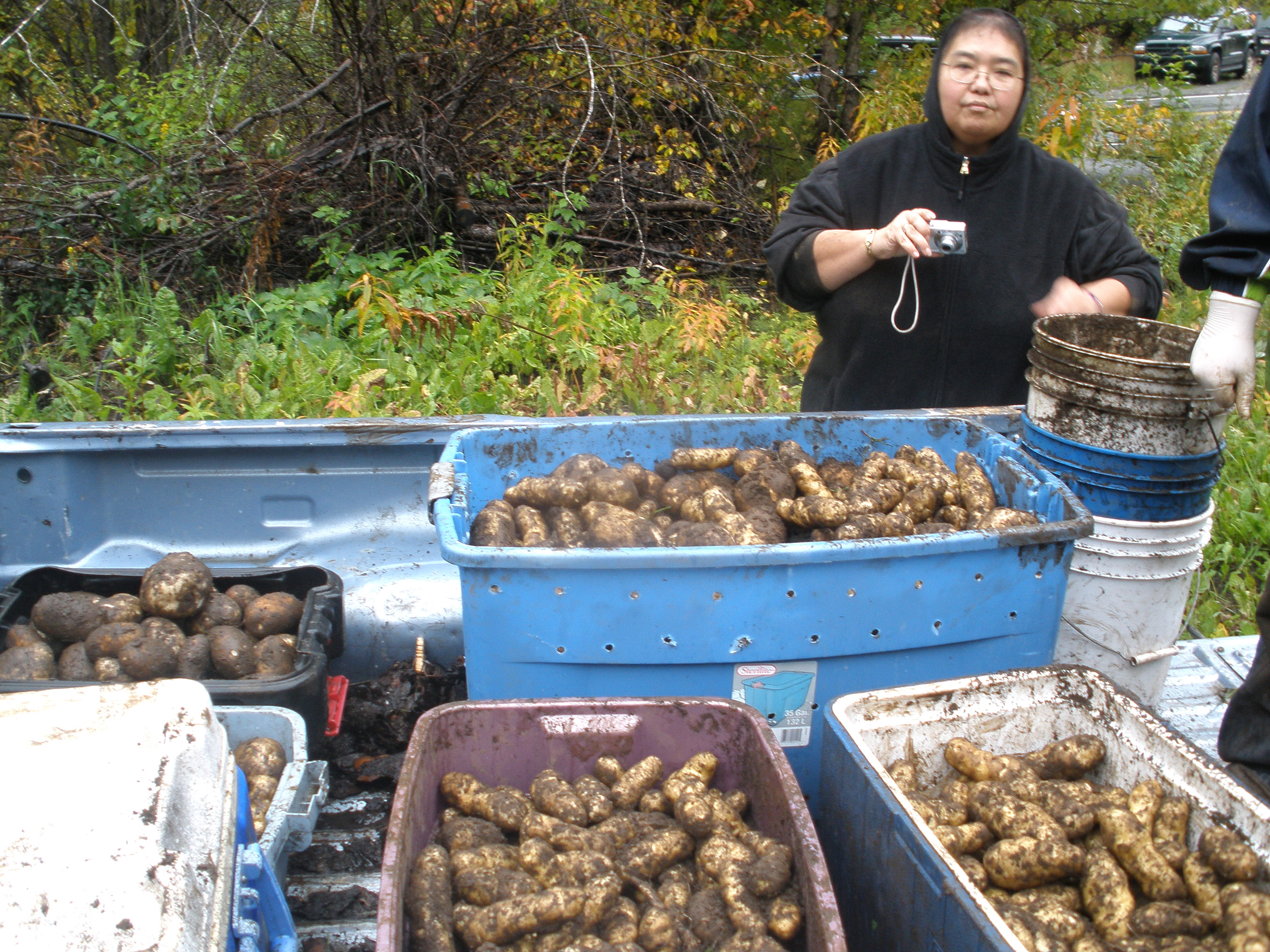 Tubs of potatoes are loaded into the back of a pick-up truck after they were picked at the WISEGUYS potato patch in Klukwan
