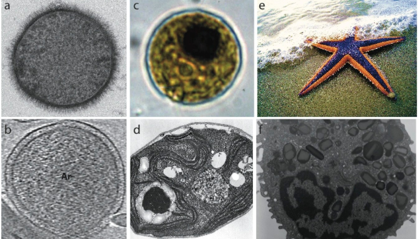 Origins Of Eukaryotes Who Are Our Closest Relatives Science In