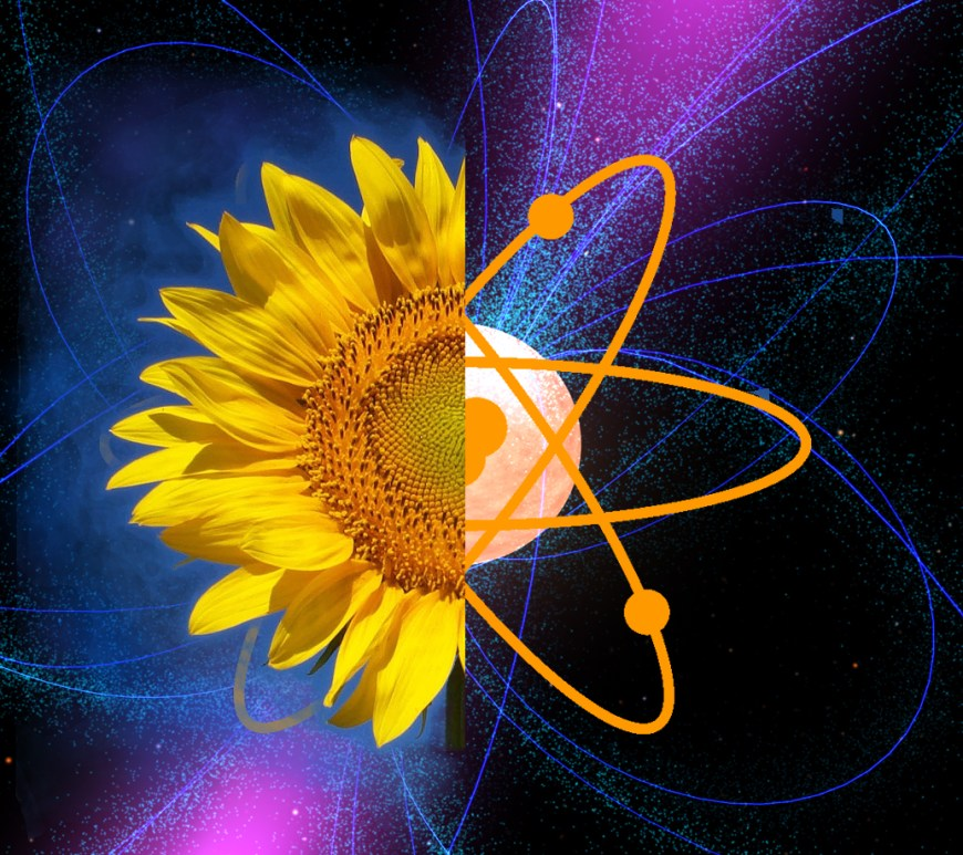 Exploring the Quantum World: From Plants to Pulsars