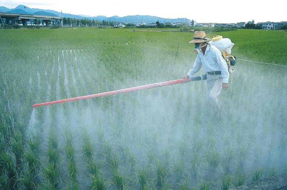 Sử dụng máy phun thuốc trừ sâu quản lý sâu bệnh