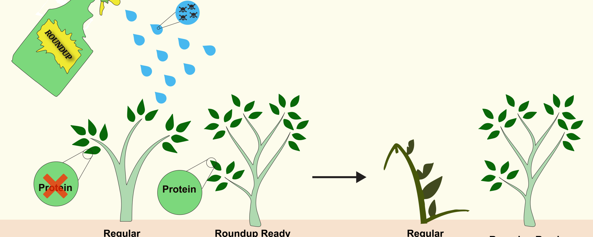 Why Roundup Ready Crops Have Lost their Allure - Science in