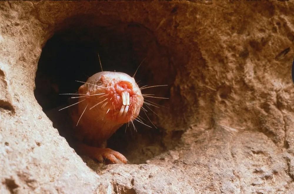 Sex Nude Rat Immune Status Pics