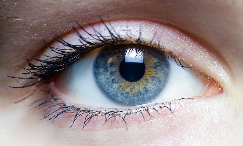 Promising results for a treatment for blindness - Science in