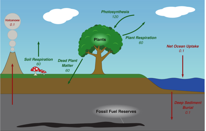 Biomass over Coal: Burning Different Carbon to Mitigate ...