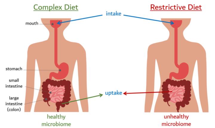 gut flora pierdere în greutate