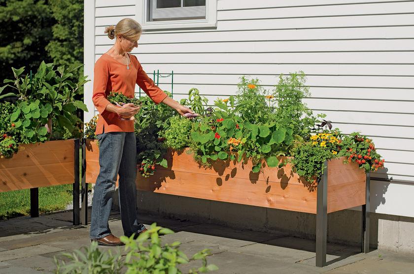 Where Buy Raised Garden Box