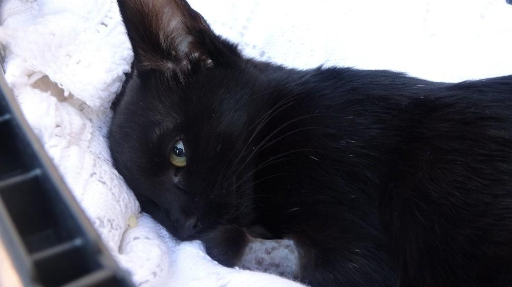 Kedisinin zehirlendiğini öğrenince gözyaşlarına boğuldu