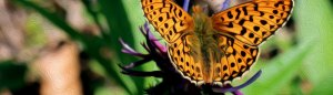 Butterfly Southern Institute for Women's Sexual Health logo