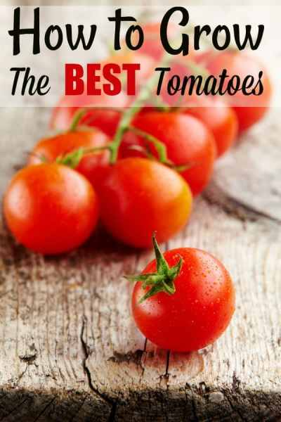 How to Grow Tomatoes - Grab your tomato plants and let's grow! If you've ever wondered how to grow tomatoes, let me show you! They're one of the easiest plants to grow in your garden OR a pot!