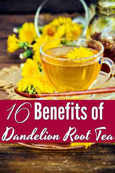 Health Benefits of Dandelion - Fancy a cuppa tea? Dandelion Root Tea is one of my favorite herbal teas! These 16 benefits of dandelion root tea will have you drinking cup after cup!