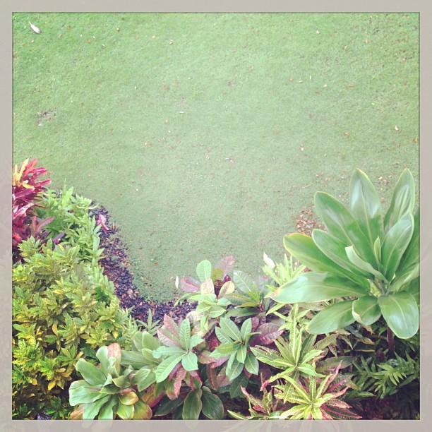 So much green!!!