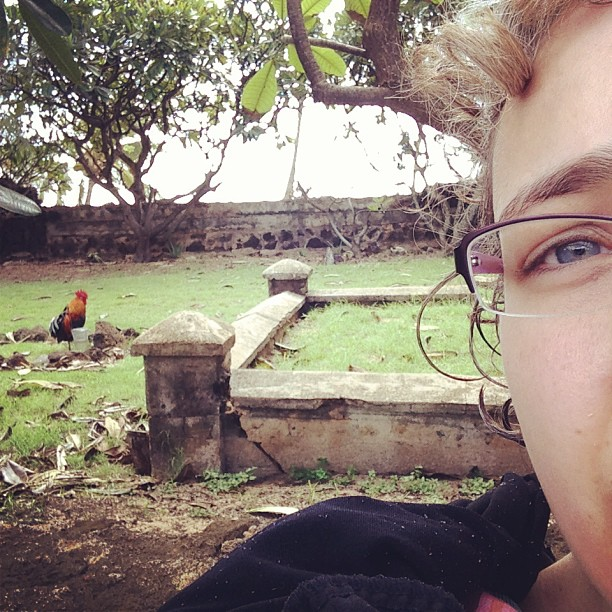 Photobombing a chicken for achievement points