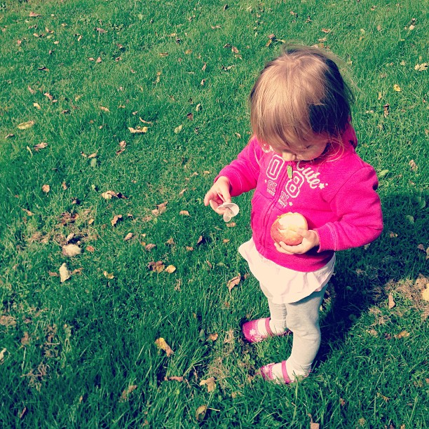 Picking apples in the front yard