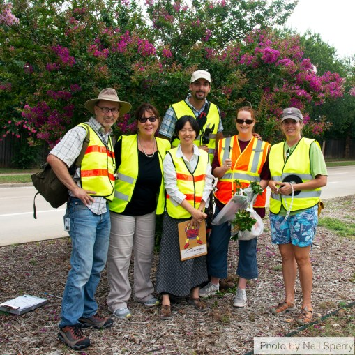 McKinney crape myrtle bark scale infestation assessment team (2014). From left to right, Dr. Mike Merchant, Susan Owens, (front) Dr. Mengmeng Gu, (back) Erfan Vafaie, Laura Miller, Janet Laminack.