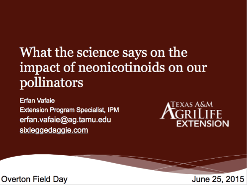 What the science says on the impact of neonicotinoids on our pollinators